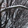 detail-snowy-trees